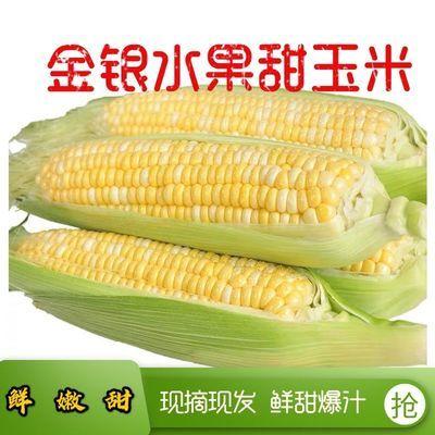 云南特产水果玉米现摘新鲜甜脆甜玉米甜玉米棒爆浆嫩非糯玉米包邮