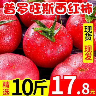 【坏包赔】普罗旺斯新鲜现摘生吃西红柿番茄孕妇水果3/5/10斤批发
