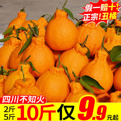 四川丑橘不知火丑八怪橘子新鲜孕妇水果当季橘子柑橘丑柑丑桔批发