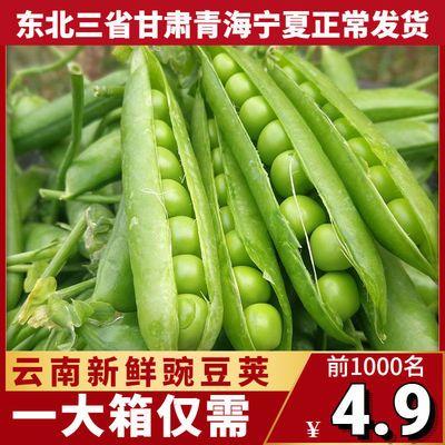 云南新鲜豌豆荚带壳5斤应季蔬菜包邮青豆米甜豆角粒弯豆荷兰1/3斤