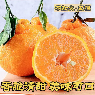 四川不知火丑橘新鲜水果当季整箱丑八怪大橘子丑桔子丑柑包邮