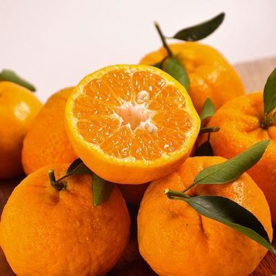 湘西椪柑新鲜当季水果椪柑丑橘蜜桔3斤/5斤装包邮(损坏包赔)