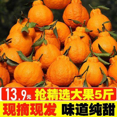 【现摘现发】四川丑橘丑柑丑八怪桔子新鲜水果粑粑橘子春见耙耙柑