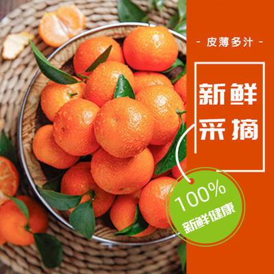 【超甜无核不打腊砂糖橘】广西砂糖橘当季新鲜孕妇水果年货批发