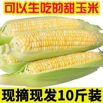 云南金银水果玉米2斤新鲜生吃甜玉米棒子粒现摘糯黏苞谷蔬菜包邮