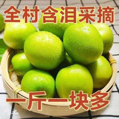 【精挑王中王枣】五斤牛奶青枣贵妃枣水果新鲜脆甜大青枣脆密枣