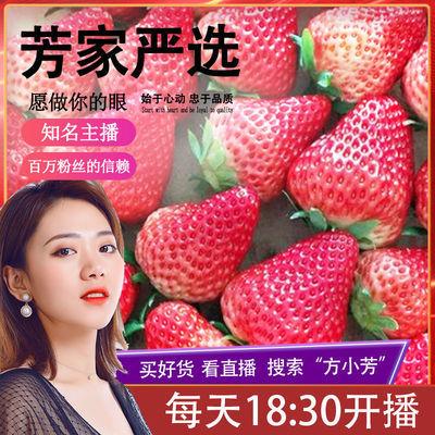 丹东99草莓水果正宗马家岗秸秆九九红颜牛奶大草莓无公害免洗