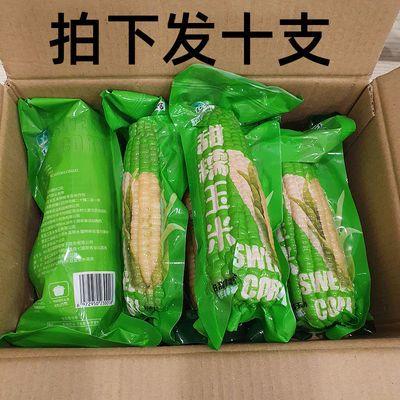 [10支]淘缘明东北甜糯玉米棒白玉米棒真空包装东北粘糯玉米棒批发