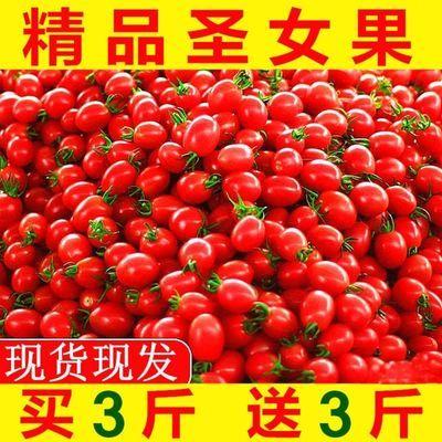 现摘圣女果新鲜水果蔬菜西红柿小番茄小柿子蔬菜批发孕妇水果包邮