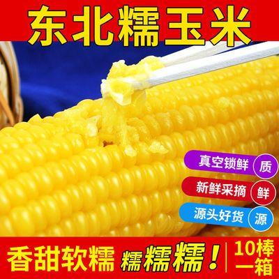 东北糯玉米新鲜批发即食真空包装非水果非转基因半熟粗粮代餐玉米