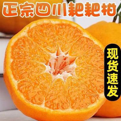 正宗四川春见耙耙柑应季新鲜水果桔子柑橘非丑橘不知火丑八怪橘子