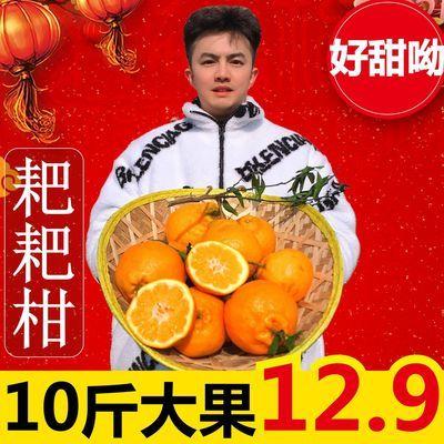 四川丑橘不知火春见耙耙柑新鲜当季孕妇水果橙子砂糖橘子桔子沃柑