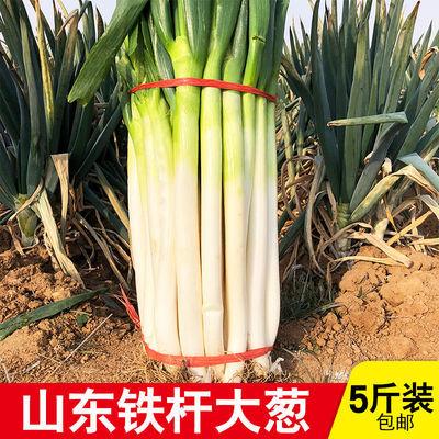 山东特级大葱新鲜5斤农家蔬菜特级铁杆香葱包邮整箱批发