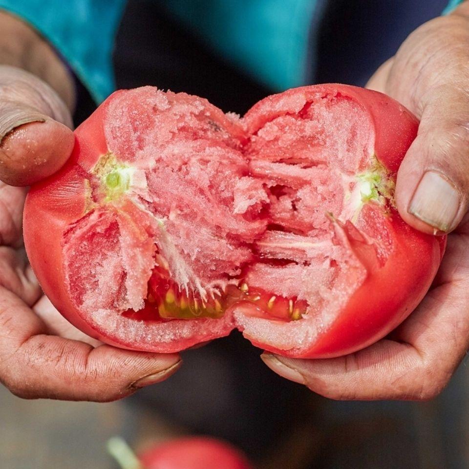 新鲜沙瓤西红柿 自然熟番茄