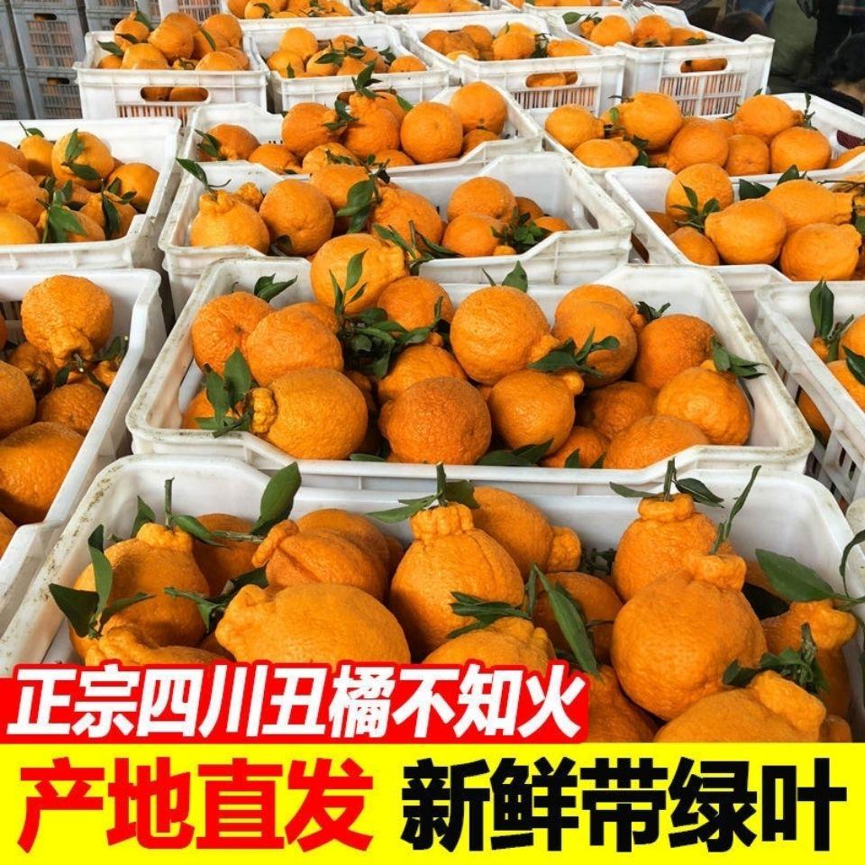 四川丑橘不知火丑八怪橘子
