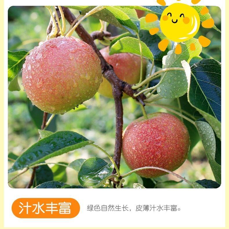 75898-正宗鞍山海城南果梨南果梨10斤装东北特产水果香水梨醉梨软梨5斤-详情图