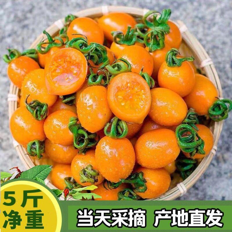 黄色圣女果新鲜水果3/5斤樱桃小番茄非千禧夏日阳光小西红柿【3月7日发完】