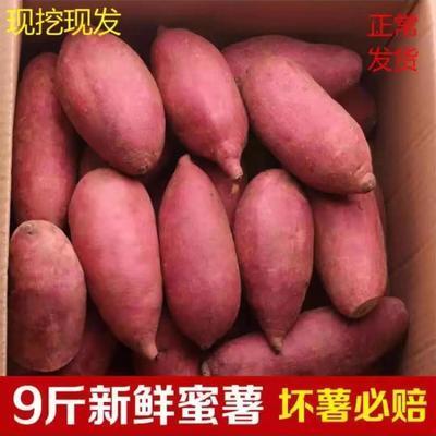 10斤新鲜红薯红心蜜薯番薯地瓜软糯香甜新鲜蔬菜小香芋地瓜现挖