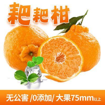 春见不知火丑橘子2/5/10斤新鲜水果当季整箱丑八怪丑桔子丑柑耙耙