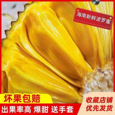 39680/现摘发货海南三亚菠萝蜜新鲜水果当应季一整个黄肉波罗蜜批发非红