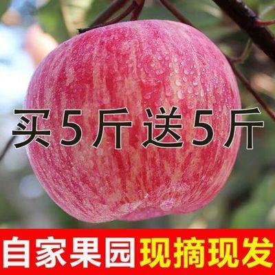 陕西红富士苹果5/10斤装新鲜非冰糖心超甜正宗鲜苹果脆甜水果批发