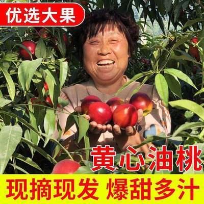【现摘现发】桃子新鲜黄心油桃新鲜水果桃驳里非水蜜桃毛桃孕妇