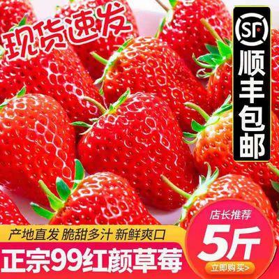 顺丰包邮红颜现货大草莓99草莓新鲜奶油草莓当季烘焙整箱孕妇水果