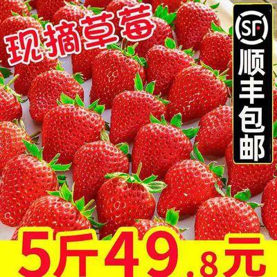 顺丰包邮大凉山露天奶油草莓牛奶草莓新鲜现摘现发礼盒烘焙整箱