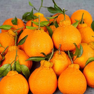 正宗蒲江不知火丑橘新鲜橘子丑八怪水果整箱批发丑桔当季水果包邮