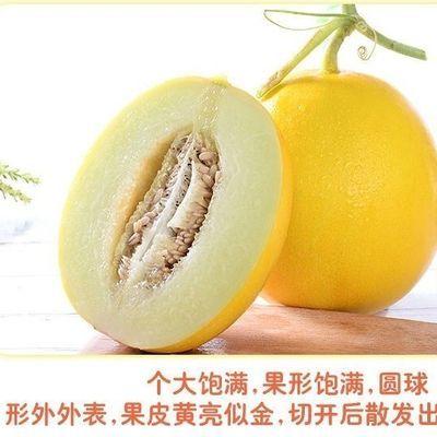 精品黄河蜜瓜阎良甜瓜2/3/5/10斤批发当季水果甜瓜非哈密瓜