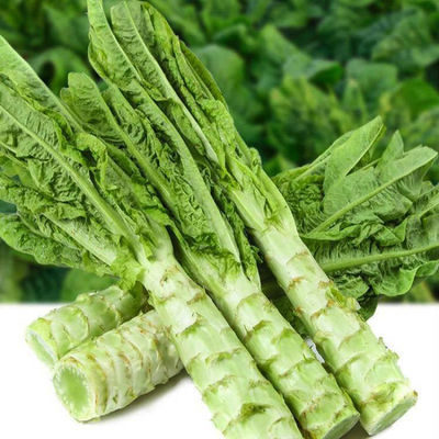 四川新鲜莴笋5斤净重应季农家自种蔬菜青笋莴苣时令5斤包邮不带叶