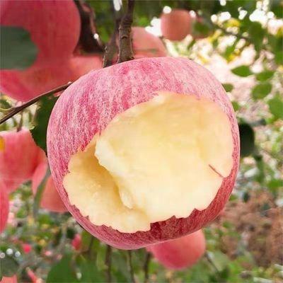 6斤装红富士苹果中果75mm红富士当季新鲜水果整箱批发