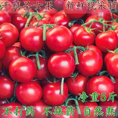 广西百色千禧圣女果蔬菜新鲜小番茄樱桃孕妇水果小西红柿新鲜现摘