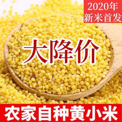 35904/浑州皇山西农家小米养胃黄小米饭月子米五谷杂粮宝宝小黄米有米油