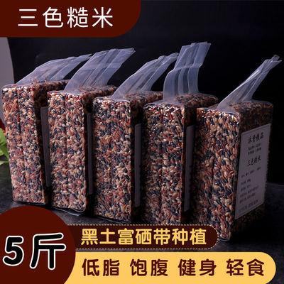 三色糙米糙米饭低脂低蔗糖孕妇控糖健身餐五谷杂粮三色米独立袋装