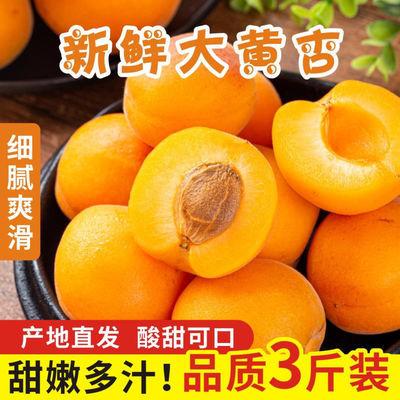 【现货】新鲜陕西大黄杏金太阳杏酸甜杏孕妇水果非贵妃杏整箱批发