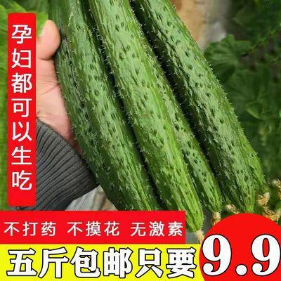 地头批发价新鲜长黄瓜农家自种当季蔬菜青瓜带刺脆嫩小黄瓜3斤5斤