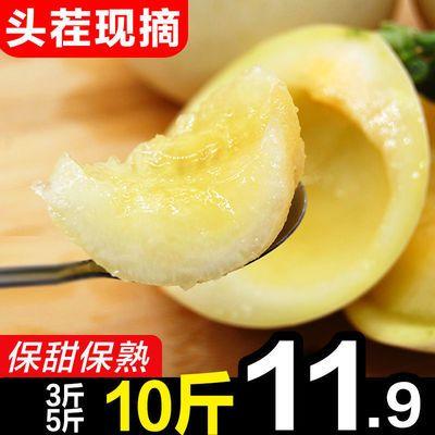 现摘白皮甜瓜香瓜孕妇新鲜水果3/5/10斤包邮批发绿宝哈密瓜羊角蜜