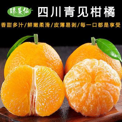 【爆汁】四川青见柑橘桔子新鲜孕妇水果应季丑橘蜜橘橘子时令整箱