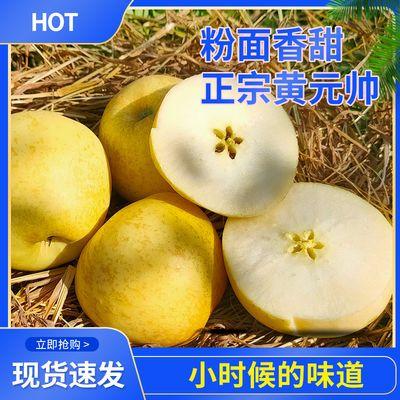 山东烟台黄元帅黄金帅苹果新鲜粉面香甜可刮泥吃应季水果批发包邮