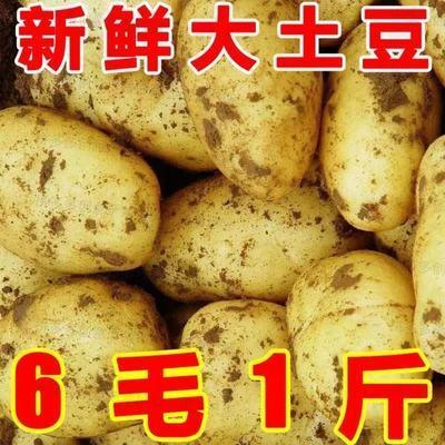 宝贝【【超低价】新鲜黄心大土豆批发价大马铃薯洋芋本地现挖2/3/5/10斤】的主图,点击查看该宝贝的拼多多优惠券领取链接!