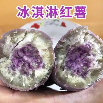 新鲜冰淇淋番薯一点红紫心番薯爆皮板香甜色彩红薯花心紫薯地瓜