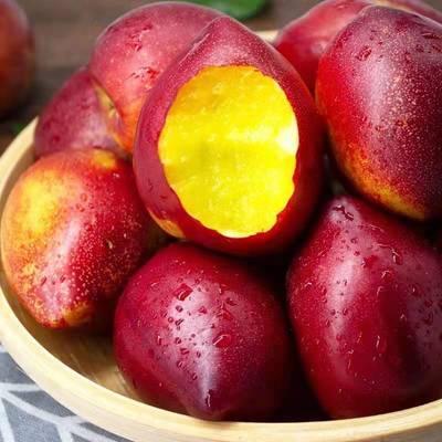 黄心油桃新鲜水果应季脆甜油桃大果孕妇水果现货批发非毛桃水蜜桃