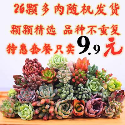 多肉植物3-20颗精品多肉不重复送盆土盆栽新手套餐防辐射绿植花卉