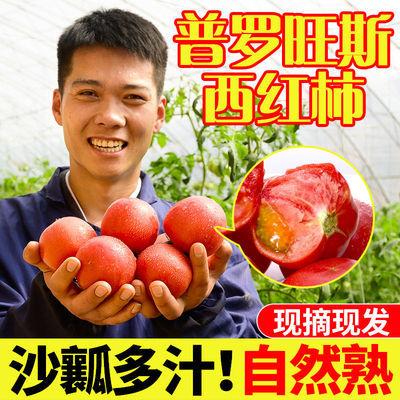 5斤山西正宗普罗旺斯水果西红柿沙瓤生吃大番茄整箱应季蔬菜批发