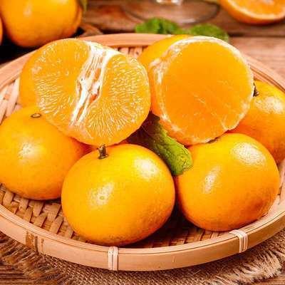 广西武鸣沃柑柑橘新鲜现摘沃柑柑桔整箱橘子包邮