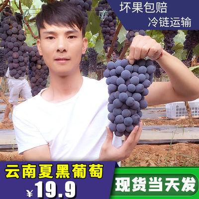 现摘现发云南夏黑无籽葡萄新鲜水果当季孕妇葡萄批发