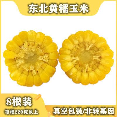 东北特产新鲜黄糯玉米棒甜糯粘玉米真空包装粗粮低脂早餐非转基因