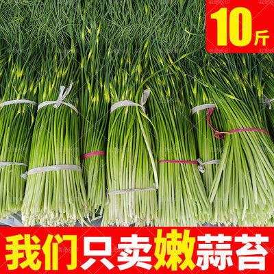 【生鲜特快】现摘新鲜蒜薹农家土蒜苔应季新鲜蔬菜新蒜毫