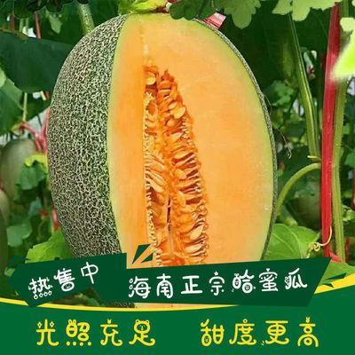 正宗海南哈密瓜西州蜜香妃小蜜25号四季甜瓜新鲜热带水果现摘批发